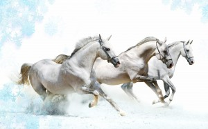 Desktop Wallpaper: 3 White Stallion Run...