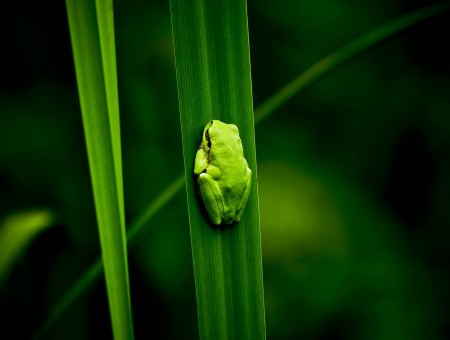 Green Small Frog On Green Grass