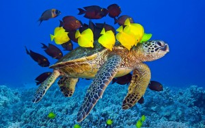 Desktop Wallpaper: Turtle With Yellow A...