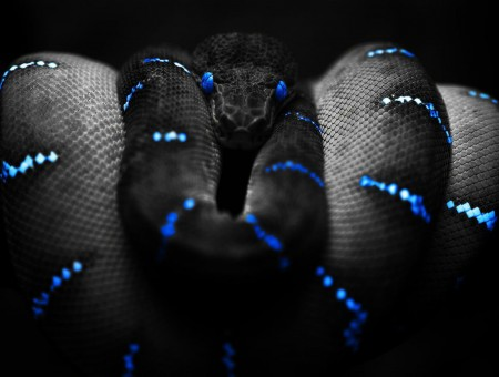 Black And Blue Snake