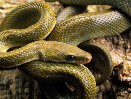 Green Snake In Close Up Photo
