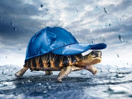 Brown Turtle With Blue Fitted Cap Under Gray Sky During Rainy Day
