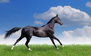 Desktop Wallpaper: Black Horse Running ...