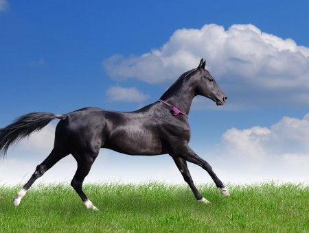 Black Horse Running On Green Grass Field During Daylight