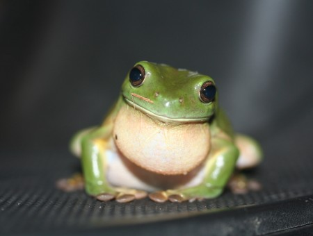 Green And White Toad