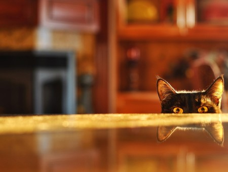 Cat Peeking Beside The Table In Macro Photography