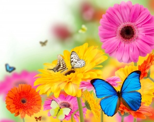 Desktop Wallpaper: Butterflies Perched ...