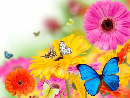 Butterflies Perched On Flowers During Daytime