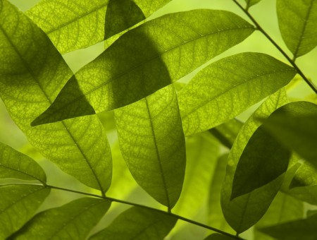 Green Parallel Leaf