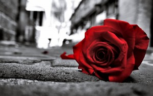 Desktop Wallpaper: Red Rose On Concrete...