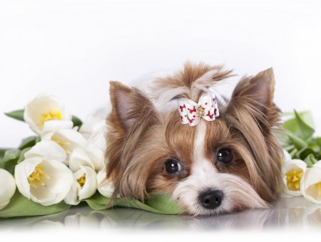 Brown And White Long Coat Small Dog Besides White Flowers
