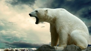 Desktop Wallpaper: White Polar Bear Nea...