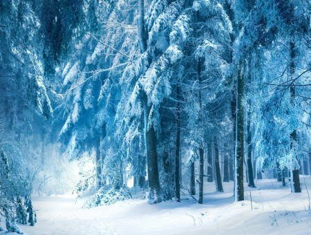 Snow forest beside tree photo