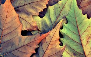 Desktop Wallpaper: Brown and green leaf