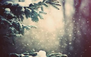 Desktop Wallpaper: Pine tree and snow