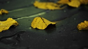 Desktop Wallpaper: Yellow leaf