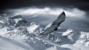 Desktop Wallpaper: Eagle and snow mount...