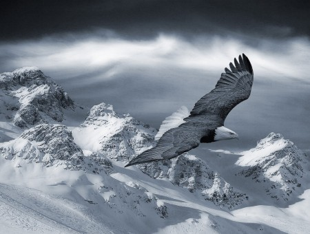 Eagle and snow mountains