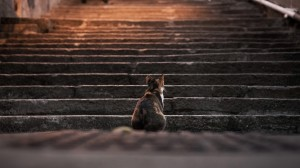 Desktop Wallpaper: Cat on the stairs