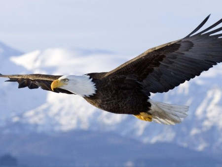 Eagle and mountains
