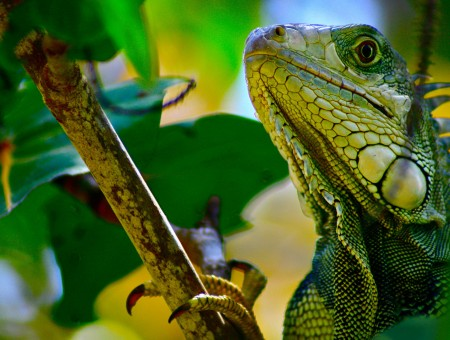 Reptile on branch