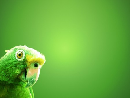 Parrot on a green background
