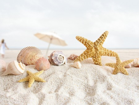 Shells and starfish on the shore