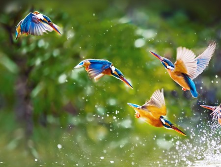 Tropical birds over the river