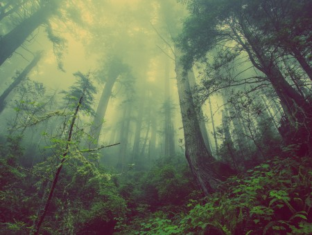 Creepy fog in the forest