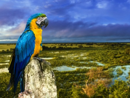 Blue-yellow macaw and good landscape