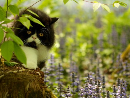 Sullen cat on forest