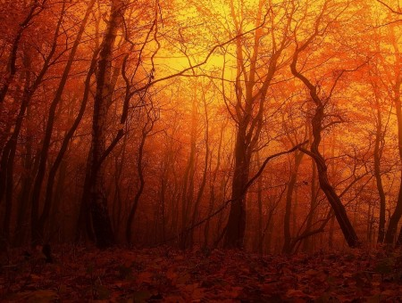 Orange autumn forest