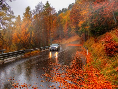 Autumn raining road