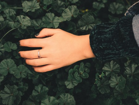 Hand on leaves