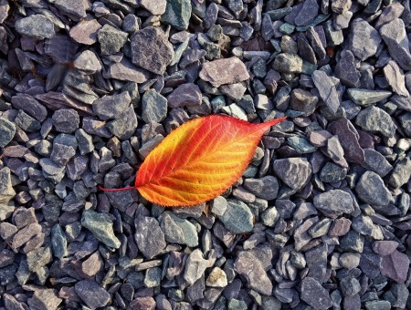Fallen leaf on the ground