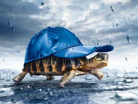 funny turtle with snapback