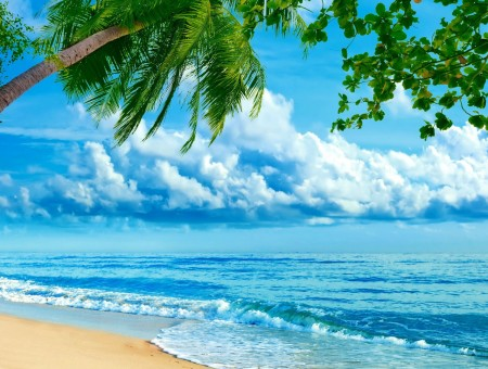 beach under palmtree
