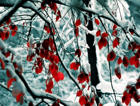 berries in snow forest