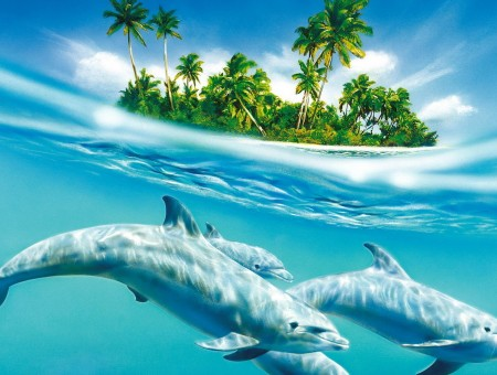 dolphins undersea with island