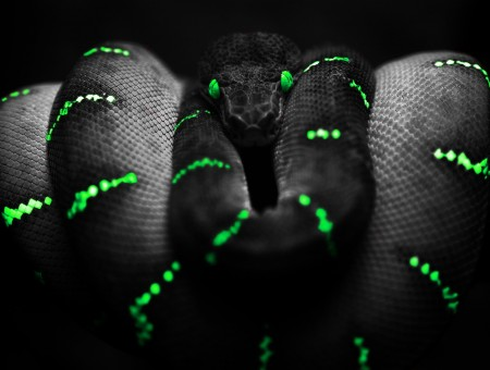 black and green snake