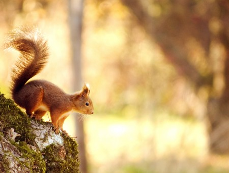 macro squirrel in  forest