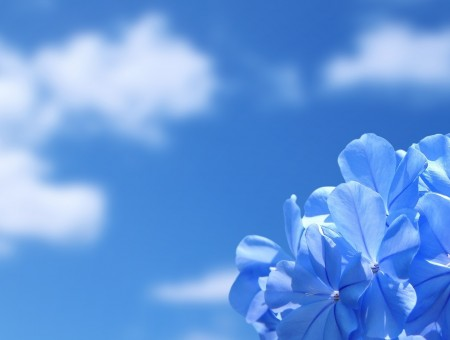 blue flowers on blue background