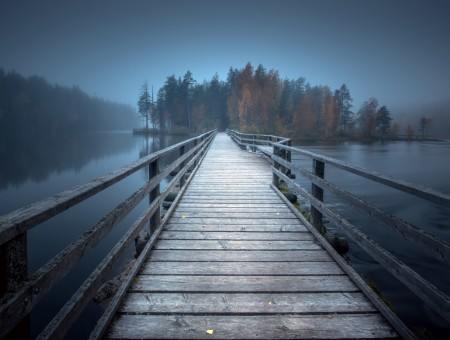 bridge in fog to forest