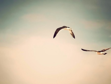 two birds in sky