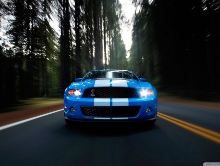 blue shelby on the road