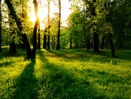 sunny green forest