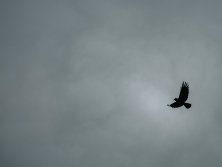 Eagle in grey sky