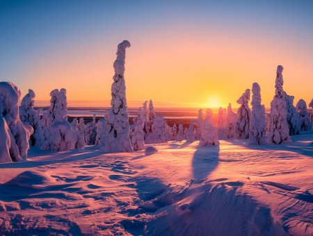 sunrise above snow forest