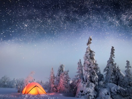 lone tent in snow forest