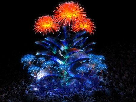 Orange and blue flowers in dark